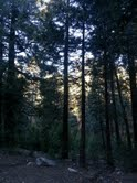 Arrowhead darkness